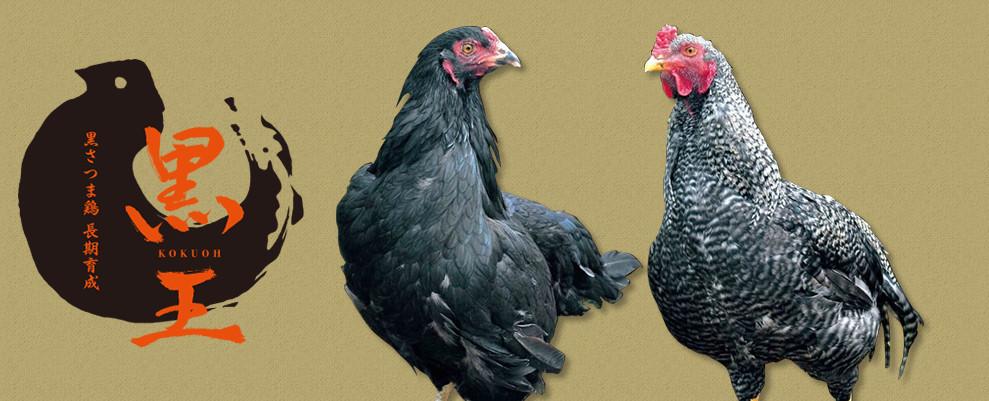 黒さつま鶏「黒王」
